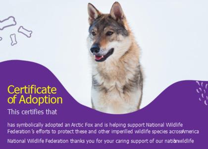 adoption card 10 dog mammal
