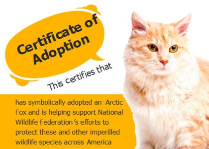 adoption card 11 cat pet