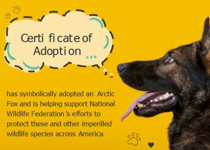 adoption card 12 dog canine