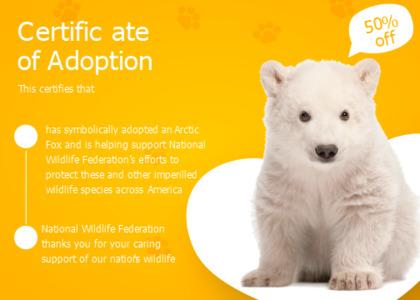 adoption card 13 bear animal