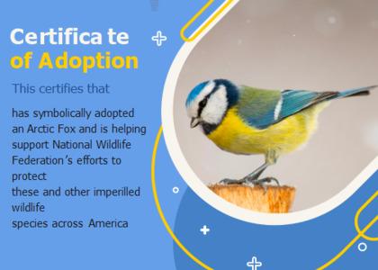 adoption card 6 bird animal