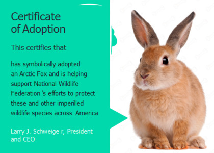 adoption card 7 hare rodent