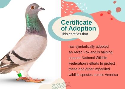 adoption card 8 bird animal