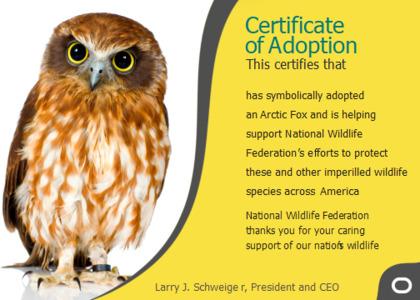 adoption card 9 chicken fowl
