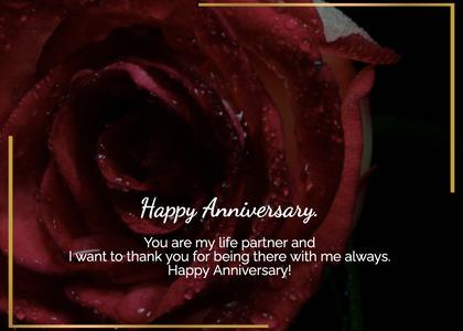 anniversary card 180 plant rose