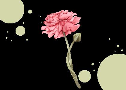 congratulations card 1 plant flower