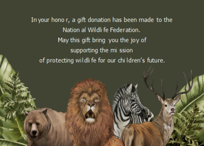 joy card 13 lion wildlife