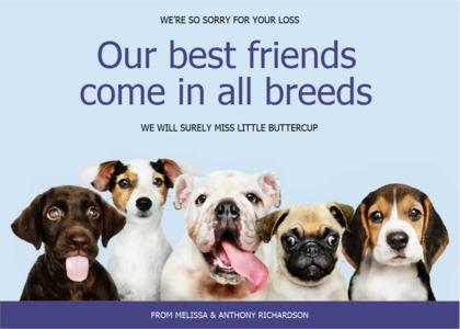 sympathy card 7 canine mammal