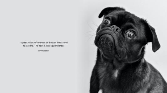 wallpaperdesktop 60 black dog hd desktop wallpaper